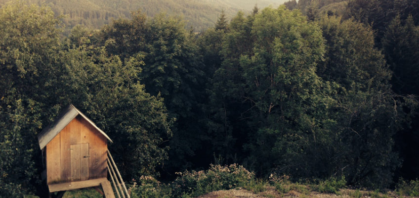 Empty Forest Scene